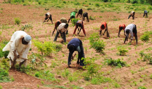 Lagos Agricultural Agency has stockpile seedling For New Planting Season