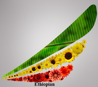 Ethiopian Airlines Plans To Takes Over Arik Air