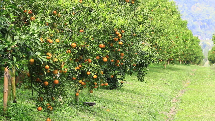 Poor yields, loan default stall credit to agric sector