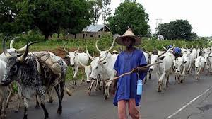 'Buhari treating herdsmen with kid gloves''