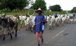 Relocate to Kano, Gov Ganduje tells herdsmen