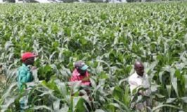 Nigeria's economy sees strong agric growth
