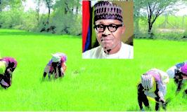 Border Closure: Takes New Way As Customs Jaw Jaw Rice farmers in Kaduna