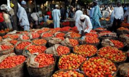 Nigerians to access N120 billion tomato market