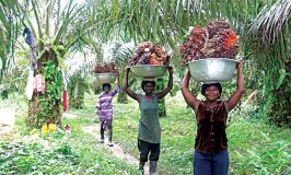 'Nigeria needs 1.2m oil palm hectares to become global leader'