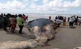 NIMASA Investigates Cause of Dead Fish along Niger Delta Coastline