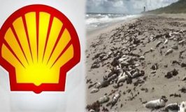 Dead Fishes: Shell Refutes Toxic Chemicals Discharge From Focados Terminal Allegation
