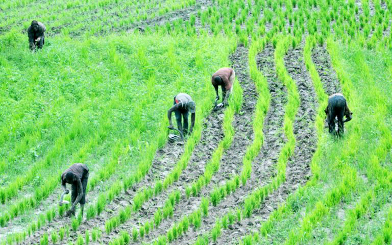 The Role of Financial Institutions in outgrowerProgrammes and Fortunes of Smallholder Farmers in Nigeria